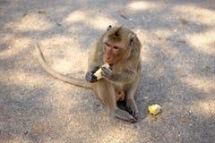 Игра обезьян и смотреть вокруг Стоковая Фотография RF