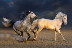 Игра 2 лошадей Стоковые Изображения RF