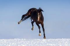 Игра лошади в снежке стоковое фото rf