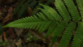 Игра света и тени на листьях папоротника видеоматериал