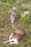Игра семьи котов Стоковые Изображения