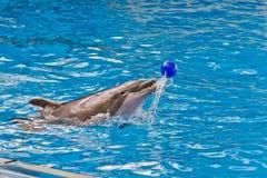 Игра шарика дельфина Стоковые Фотографии RF