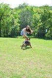 Игра щенка немецкой овчарки Стоковое фото RF