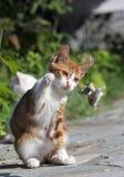 игра s кота стоковое изображение rf