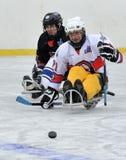 2 игрока играя хоккей розвальней Стоковая Фотография RF