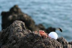 игроки в гольф Гавайские островы Стоковая Фотография