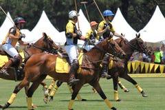 Игроки и лошади поло стоковое изображение
