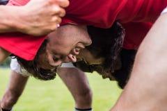 Игроки рэгби делая груду Стоковые Фото