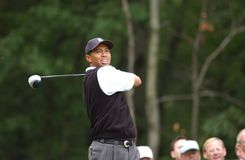 Игрок в гольф Tiger Woods профессиональный стоковые изображения rf