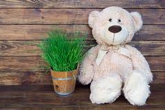 игрушечный медведя коричневый стоковое изображение rf