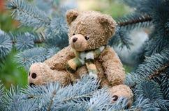 игрушечный сосенки ветви медведя Стоковое фото RF