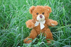 игрушка игрушечного плюша медведя Стоковые Изображения RF