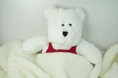 Игрушка медведя Стоковые Изображения RF