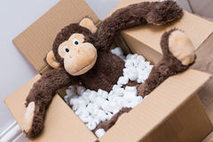 Игрушка обезьяны в коробке стоковые фото