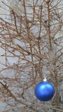Игрушка рождества на сухой ветви ели Стоковое Фото