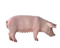 игрушка свиньи Стоковая Фотография RF