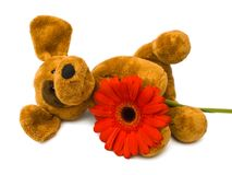 игрушка цветка собаки Стоковое фото RF