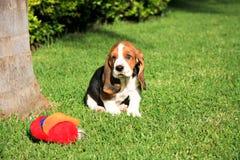 игрушка щенка гончей basset Стоковая Фотография RF
