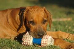 игрушка щенка стоковая фотография rf