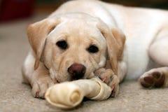 игрушка щенка chew Стоковая Фотография