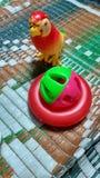 игрушка Стоковые Изображения RF