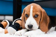 игрушки милого щенка малые Стоковые Фотографии RF