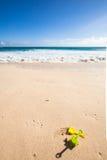 Игрушки на пляже Стоковые Фотографии RF