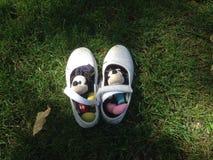 Игрушки плюша на траве Стоковое Изображение