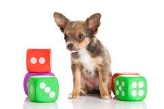 Игрушки собаки изолированные на белой предпосылке Стоковые Фотографии RF
