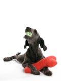 игрушки labradoodle Стоковые Изображения