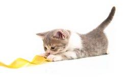 игры котенка связывают желтый цвет тесьмой Стоковые Фотографии RF