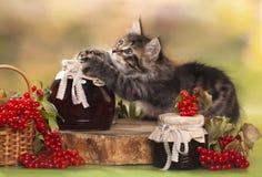 Игры котенка с вареньем Стоковое Изображение RF