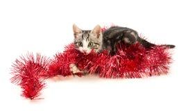 Игры котенка с гирляндой Стоковая Фотография