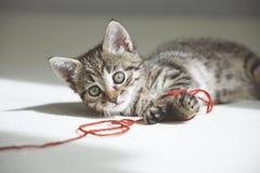 Игры котенка с красным потоком Стоковые Изображения RF