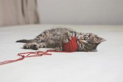 Игры котенка с путать потока Стоковые Изображения RF