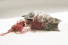 Игры котенка с путать потока Стоковая Фотография