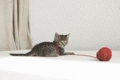 Игры котенка с путать потока Стоковое фото RF