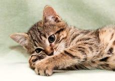 игры котенка Стоковые Изображения