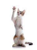 Игры котенка Стоковые Фото