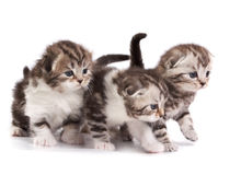 игры котят предпосылки белые стоковая фотография rf