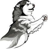 Игры породы собаки Malamute бесплатная иллюстрация