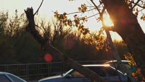 Игры света захода солнца в ветвях дерева с парковкой на предпосылке видеоматериал