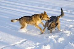 игры собаки Стоковое фото RF
