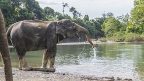 Игры слона в реке Стоковые Изображения