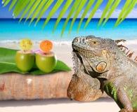 игуана Мексика кокоса пляжа карибская стоковое фото