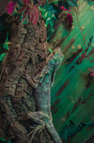 Игуана стоковое фото rf
