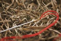 Игла в сене стоковое изображение rf
