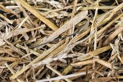 Игла в стоге сена Стоковое Фото
