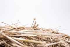 Игла в стоге сена Стоковые Изображения