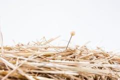 Игла в стоге сена Стоковое Изображение RF